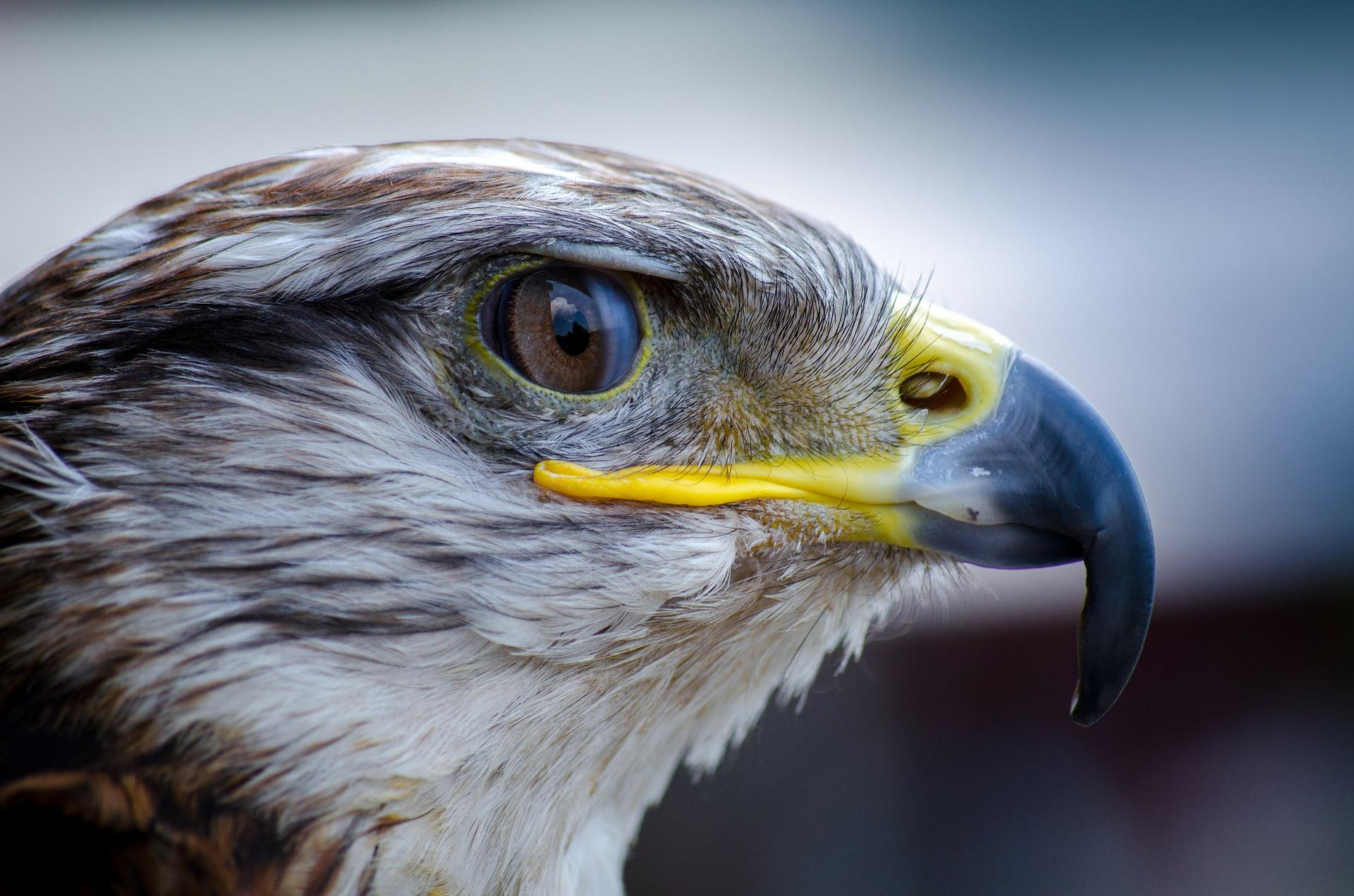 Claim over alleged agreement for breeding of falcons in