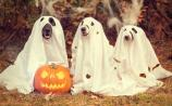 WATCH: Dogs Trust Halloween tips for a howling good time
