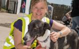 PHOTO GALLERY: Kildare Animal Foundation Open Day 2019, celebrating 25 years