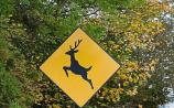 Warning about wild deer on busy Kildare road