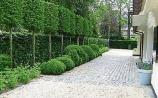 Gardening: Using trees to create privacy outdoors