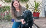 Irish Guide Dogs for the Blind awareness day: Kildare's Birte and Teegan make a fantastic team
