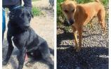 WATCH: Meet the rescue dogs looking for homes in Kildare animal shelter