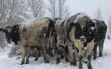 KILDARE OPINION: Socks, bullocks, bad drivers and bread jokes - lessons to be learned from the snow