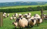 Kildare and mid east farms larger than average says new survey