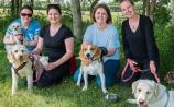 Pooches pop in for a mooch around new Naas dog park y