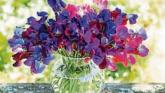 Gardening: Making the most of the garden in the summer weather