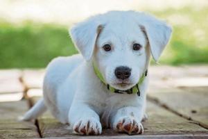 """Don't post photos of pets on social media"" – Garda warning on dog thefts"