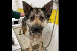 PICTURES: Rescue dog makes incredible transformation with new family