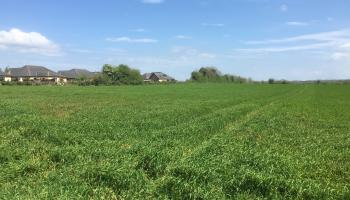 PROPERTY WATCH: Kildare review and outlook for the agricultural land market