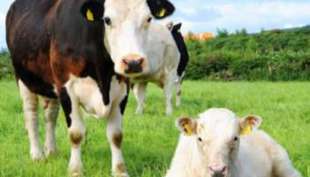 Sustainable Farming event to take place in Kildare