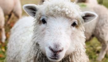 Irish farming story