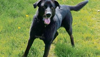 KILDARE PET RESCUE: Give a dog a home
