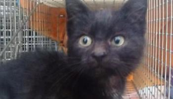 Happy ending for kitten Curry found in Naas PC World's washing machine department