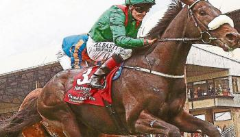 THE PUNTER'S EYE: Irish Derby Special