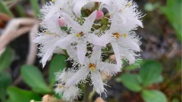Kildare's Wildlife Watch: Pledge your garden for pollinators