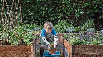 Search is on for Kildare's budding young gardeners