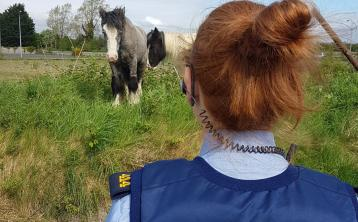 Gardai at the scene of two abandoned horses in Naas.