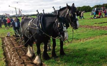 Co Laois venue for next year's Ploughing Championships