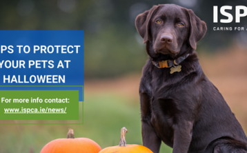 ISPCA issues pet safety tips for a safe Halloween