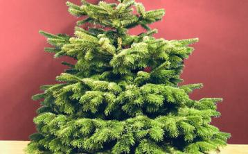 Buy your real Christmas Tree online and get it delivered with new Kildare business