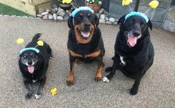 KWWSPCA's Easter Photo Competition winners