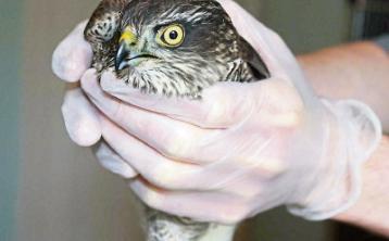 KILDARE ANIMAL FOUNDATION: Winter bills mean we need your help