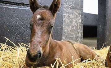 Irish National Stud welcomes the first foal of the season