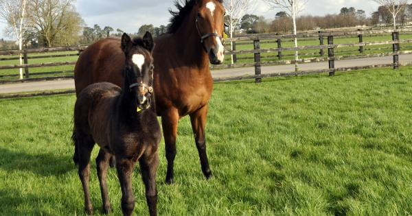 New Director Appointed To Irish National Stud Board