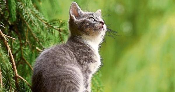 Get Cat Neutered Cheap