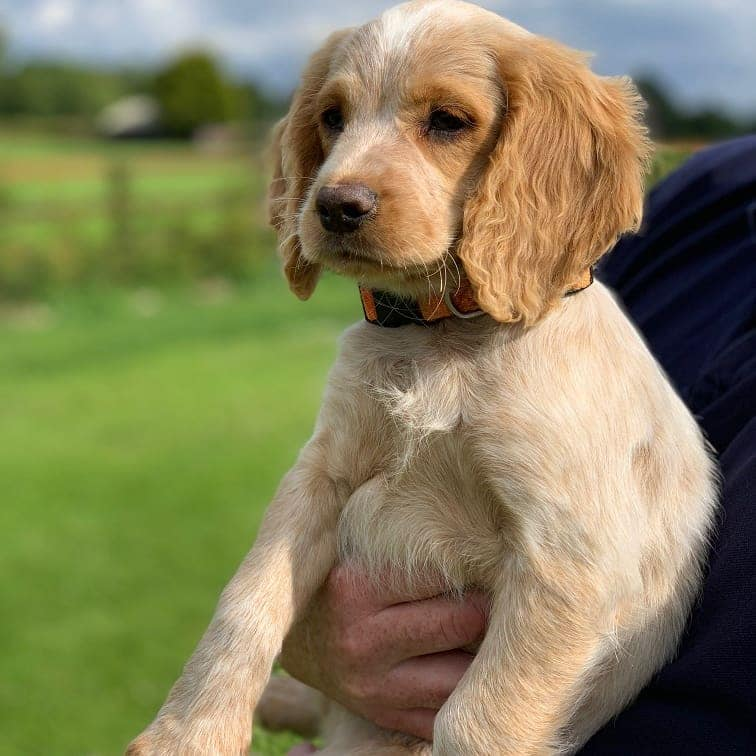 Paw Patrol! Vote to name the new Garda Siochána puppy - Leinster Leader